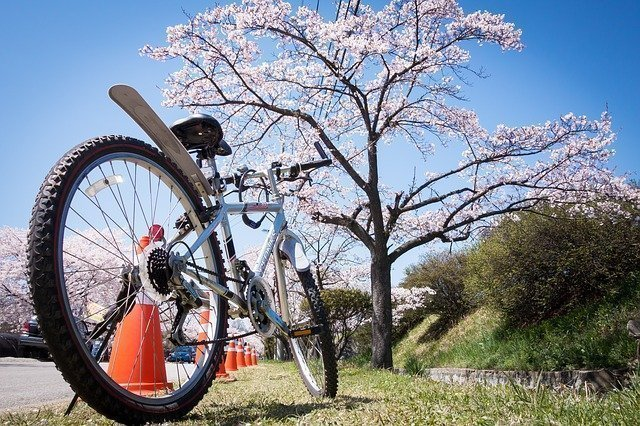 Fietsen in de Betuwe de Bloesem fietsroute