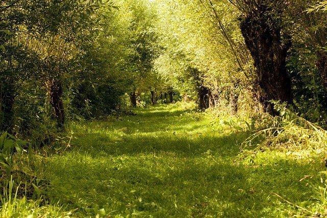 Fietsroutes Bieschbosch