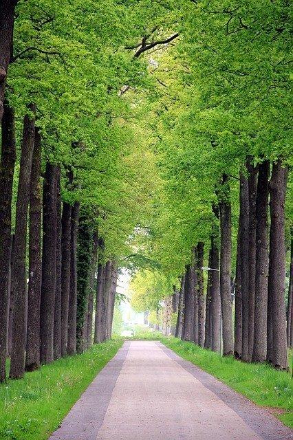 Fietstip in Friesland de fietsroute van Oranjewoud naar Noordwolde
